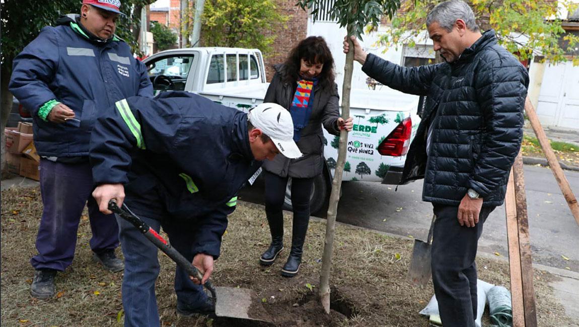 Verde Avellaneda: el Municipio planta 10.000 árboles en todos los barrios