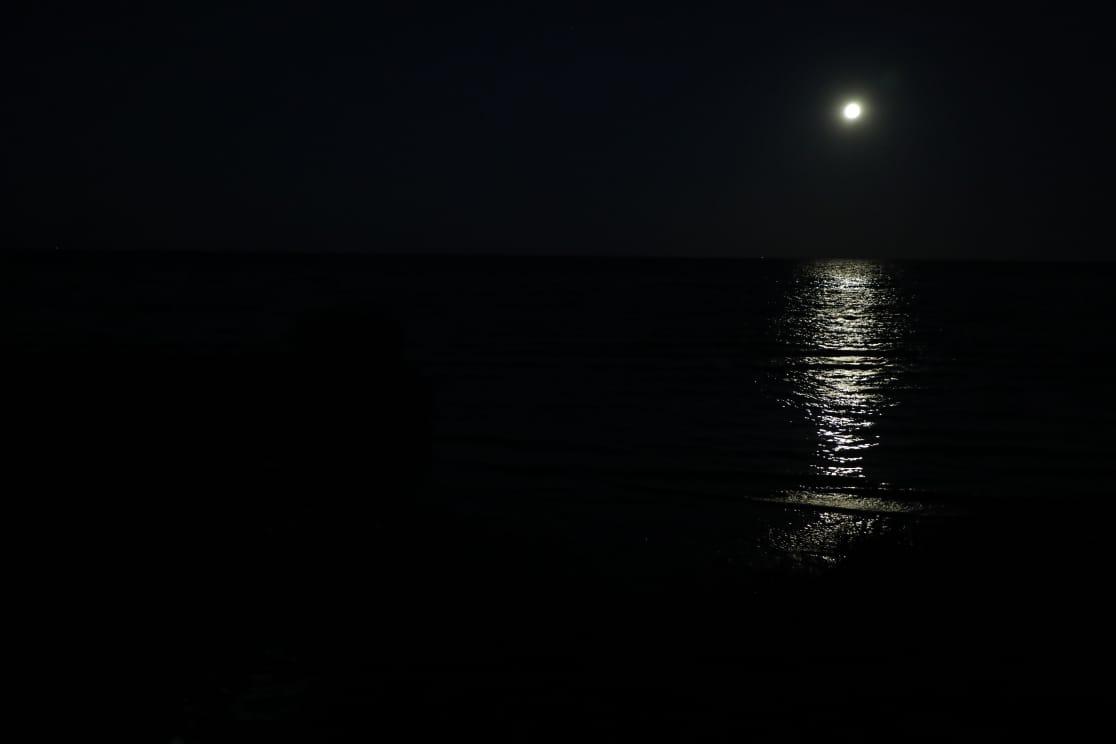 Eco Área a la luz de la luna: comenzaron los paseos nocturnos por la selva de Sarandí