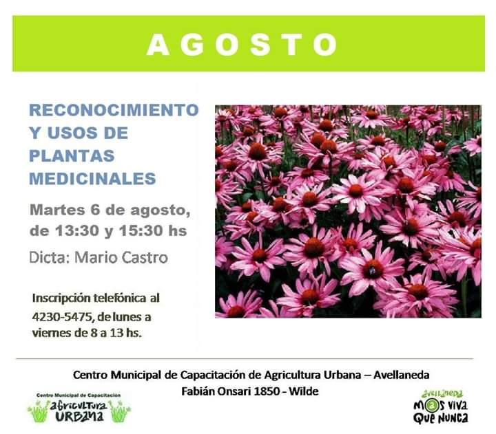 ¿Te gustaría tener tu propio cultivo de plantas aromáticas?